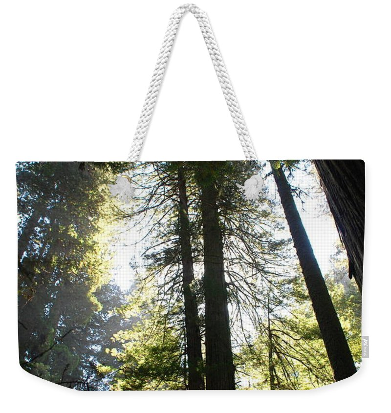 Redwoods Weekender Tote Bag featuring the photograph Redwoods IIII by Kathy Sampson
