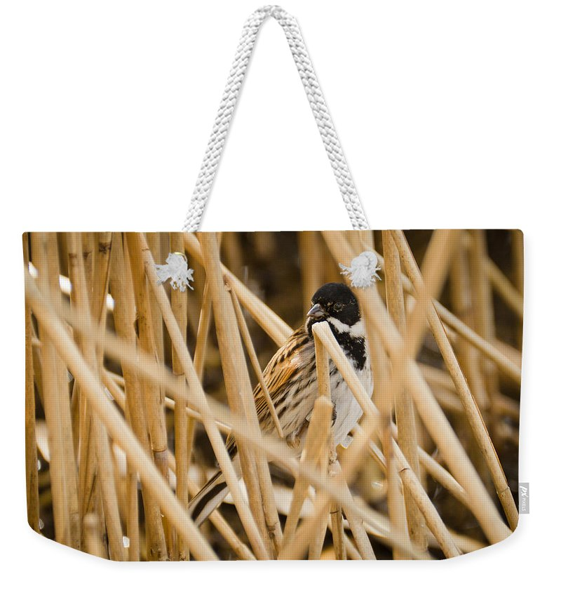 Animal Weekender Tote Bag featuring the photograph Reed Bunting by David Head