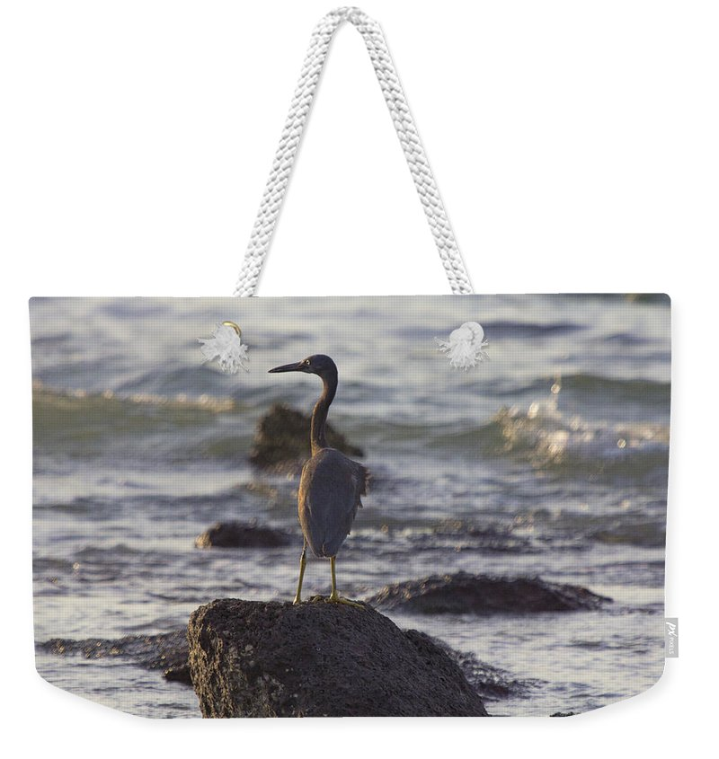 Reef Egret Weekender Tote Bag featuring the photograph Reef Egret by Douglas Barnard