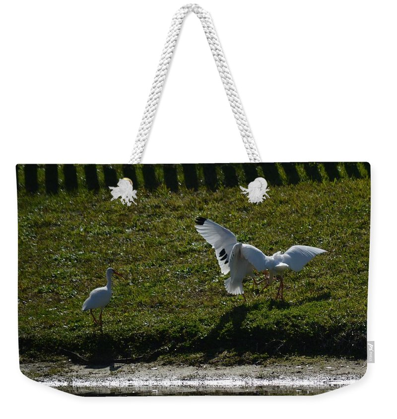 Bird Weekender Tote Bag featuring the photograph Referee by Linda Kerkau