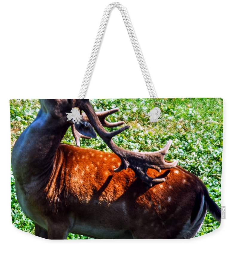 Optical Playground By Mp Ray Weekender Tote Bag featuring the photograph Reindeer Scratch by Optical Playground By MP Ray