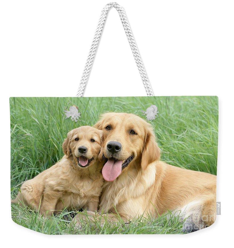 Dogs Weekender Tote Bag featuring the digital art Relaxing Retrievers by MGL Meiklejohn Graphics Licensing