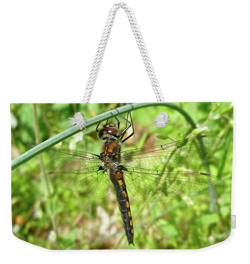 Dragonfly Weekender Tote Bag featuring the photograph Resting Brown Dragonfly by Mother Nature