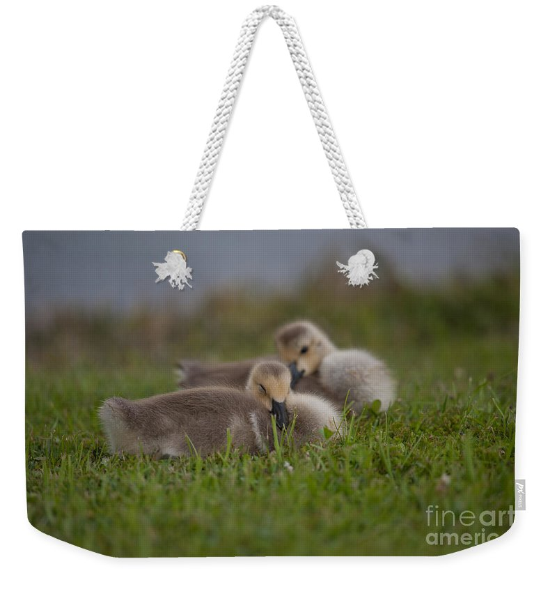 Gosling Weekender Tote Bag featuring the photograph Resting Our Eyes by Dale Powell