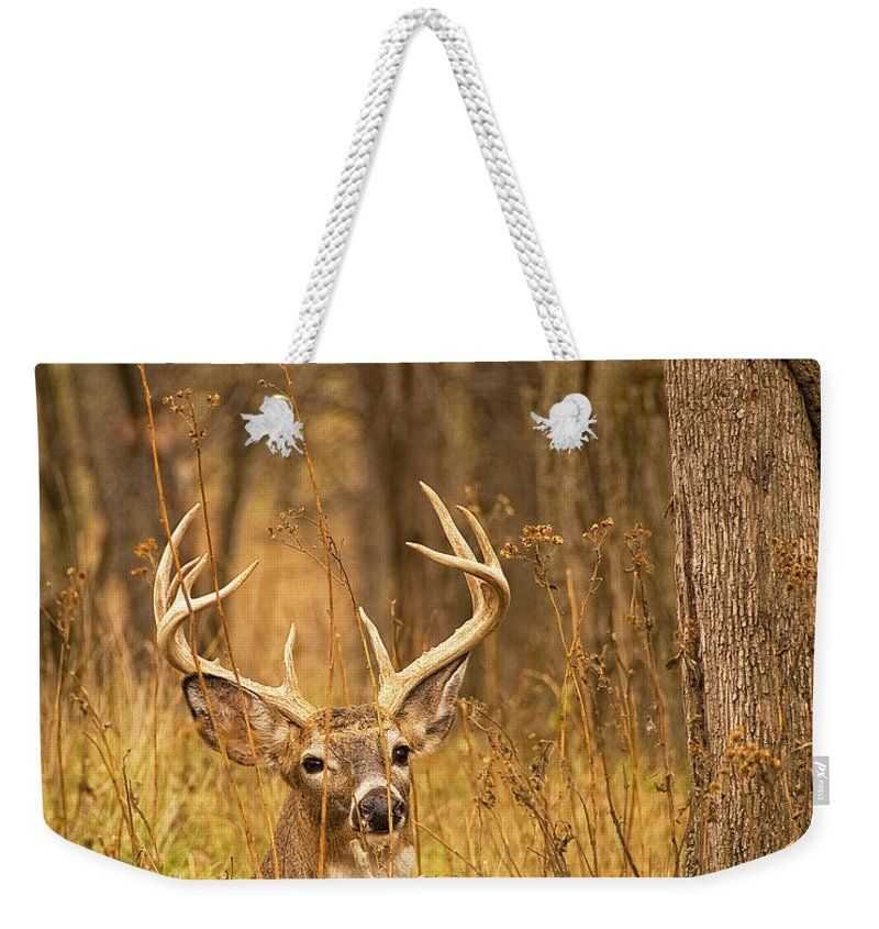 Buck Weekender Tote Bag featuring the photograph Resting White-tailed Deer Buck by Timothy Flanigan and Debbie Flanigan Nature Exposure