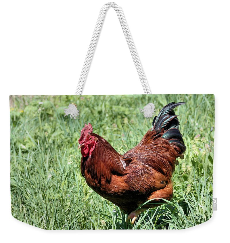 Rooster Weekender Tote Bag featuring the photograph Rhode Island Red by Kristin Elmquist