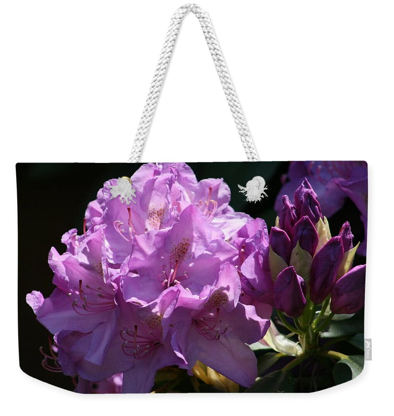 Rhododendron Weekender Tote Bag featuring the photograph Rhododendron In The Morning Light by Kay Novy