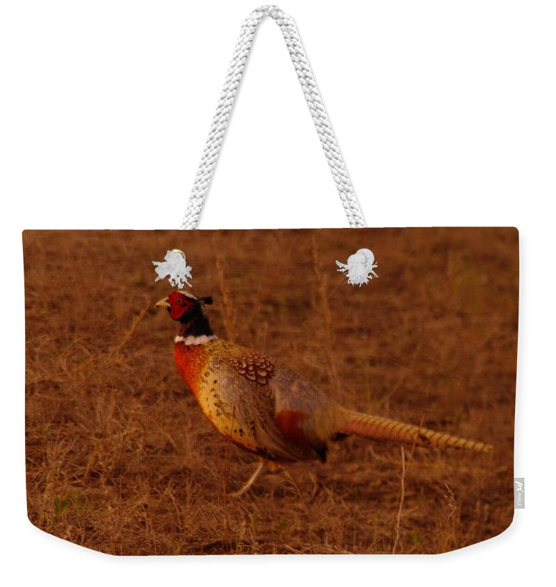 Birds Weekender Tote Bag featuring the photograph Ring Neck Pheasant by Jeff Swan