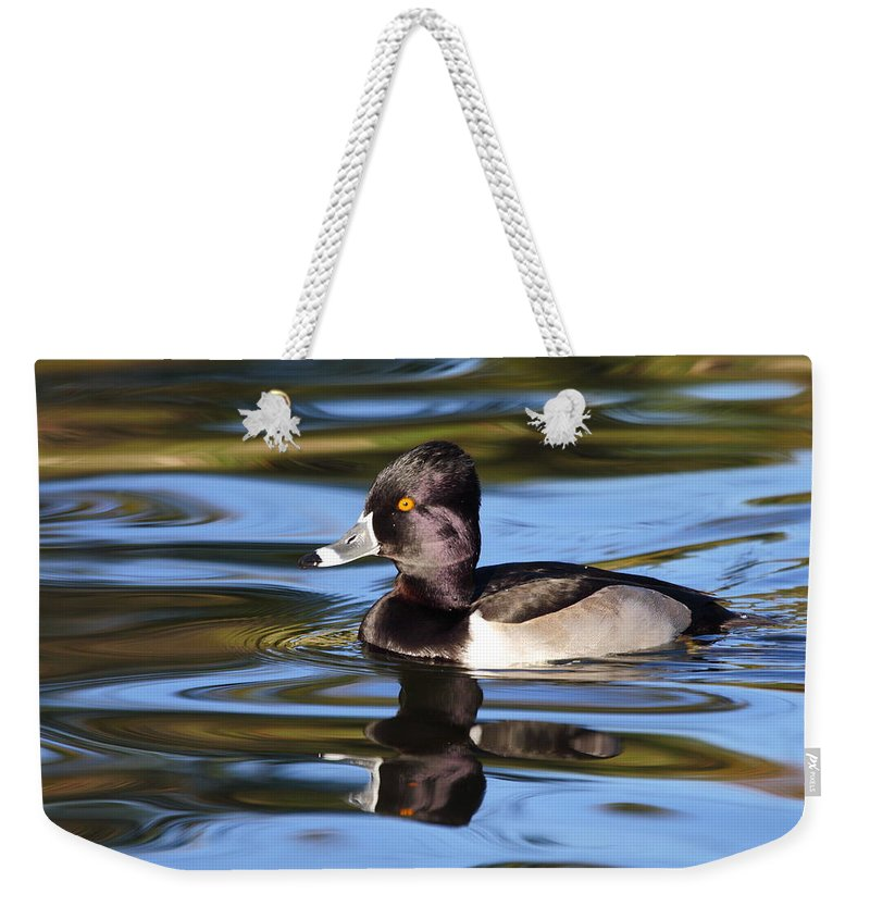 Ring-necked Duck Weekender Tote Bag featuring the photograph Rings around Ring-necked Duck by Andrew McInnes