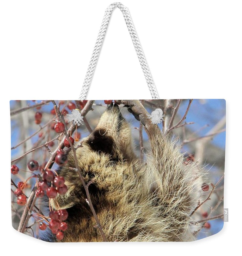 Raccoon Weekender Tote Bag featuring the photograph Ripe For The Picking by Doris Potter