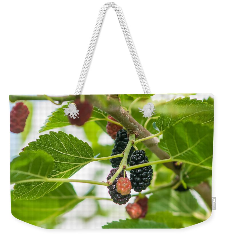 Ripe Mulberry On The Branches Weekender Tote Bag featuring the photograph Ripe Mulberry On The Branches by Alex Grichenko