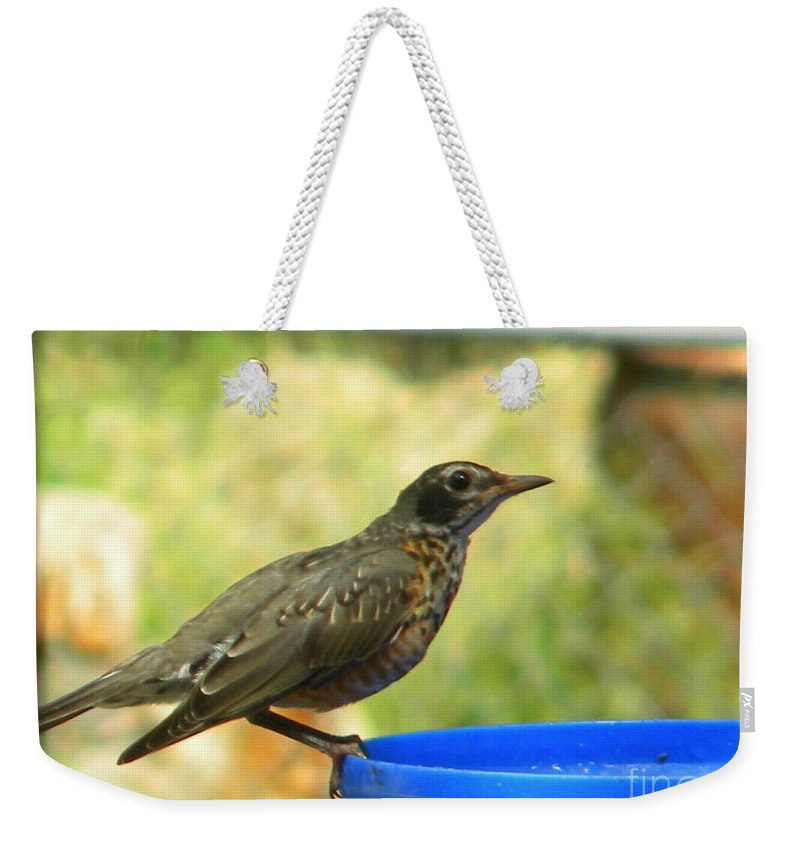 Robin Weekender Tote Bag featuring the photograph Robin Frisbee by Nathanael Smith