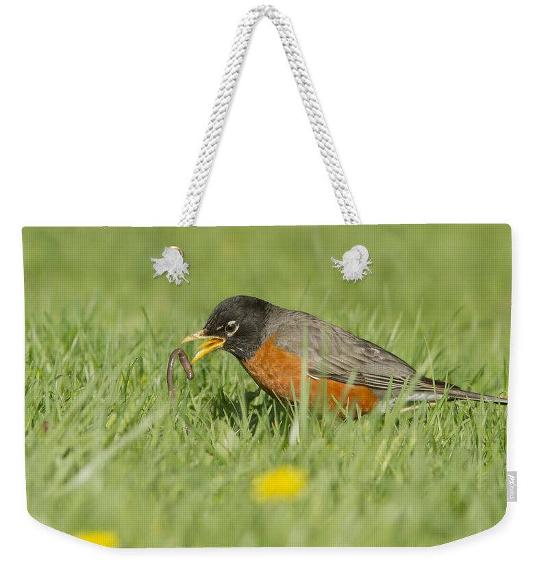 American Weekender Tote Bag featuring the photograph Robin Vs Worm by Mircea Costina Photography
