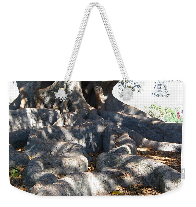 Moreton Fig Tree Weekender Tote Bag featuring the photograph Roots Of Large Fig Tree by Denise Mazzocco