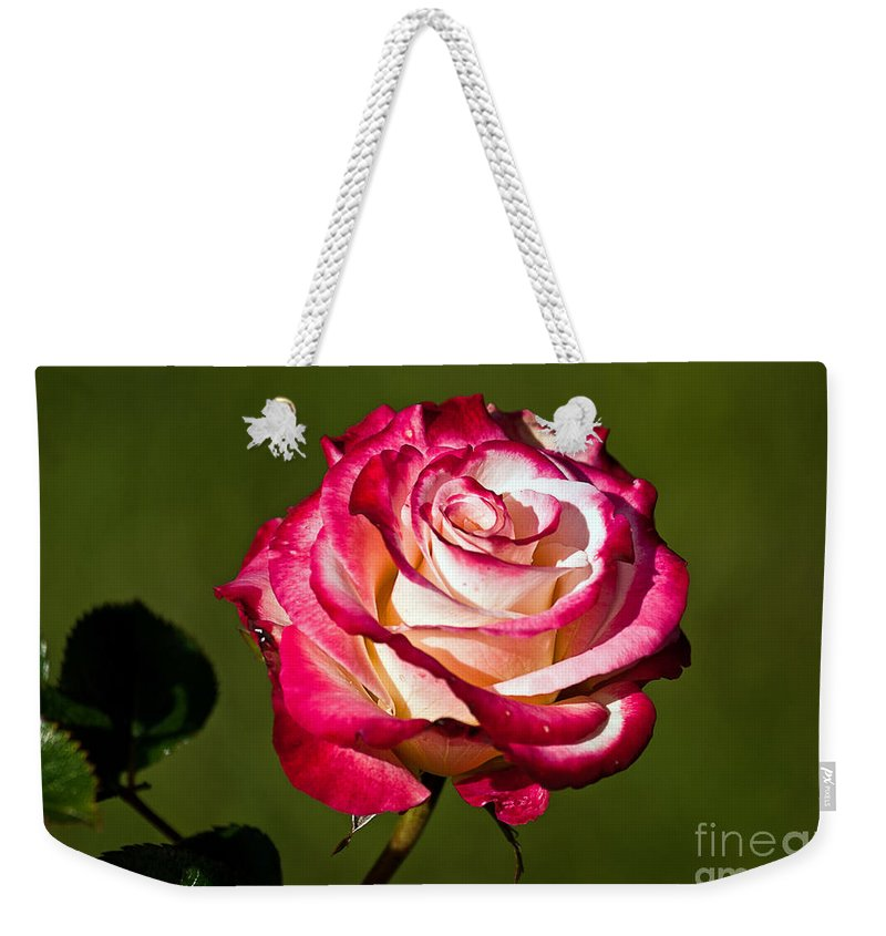 Kate Brown Weekender Tote Bag featuring the photograph Rose Dick Clark by Kate Brown