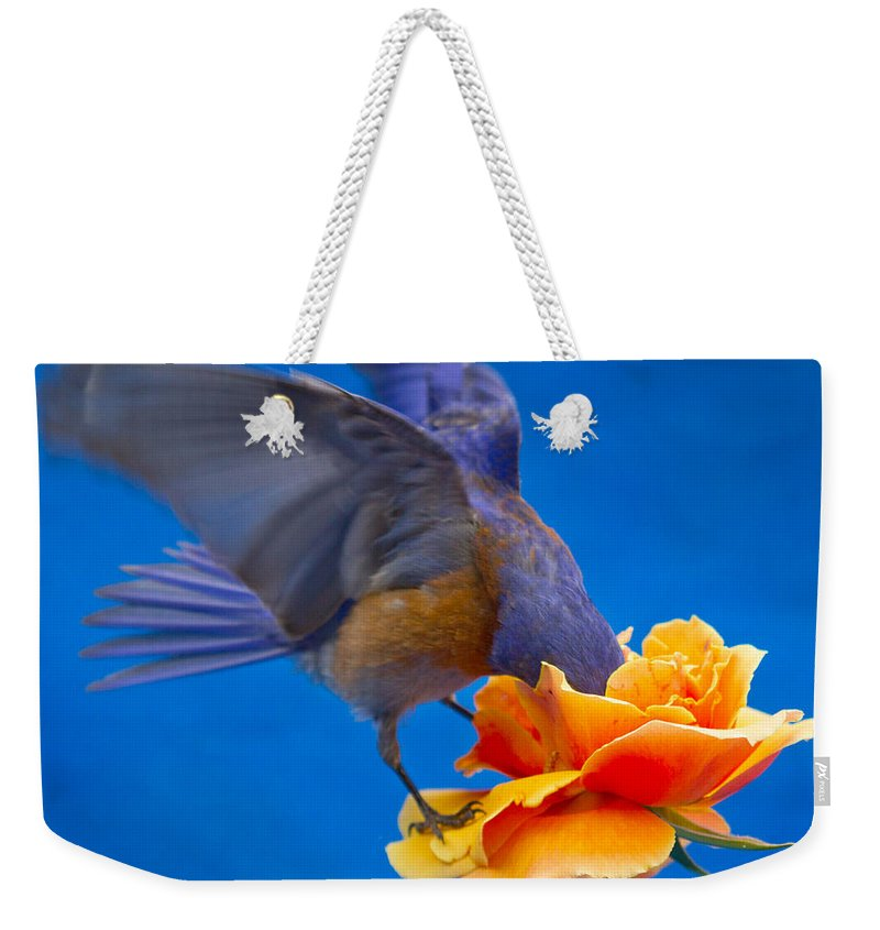 Animals Weekender Tote Bag featuring the photograph Rose Excavation by Jean Noren