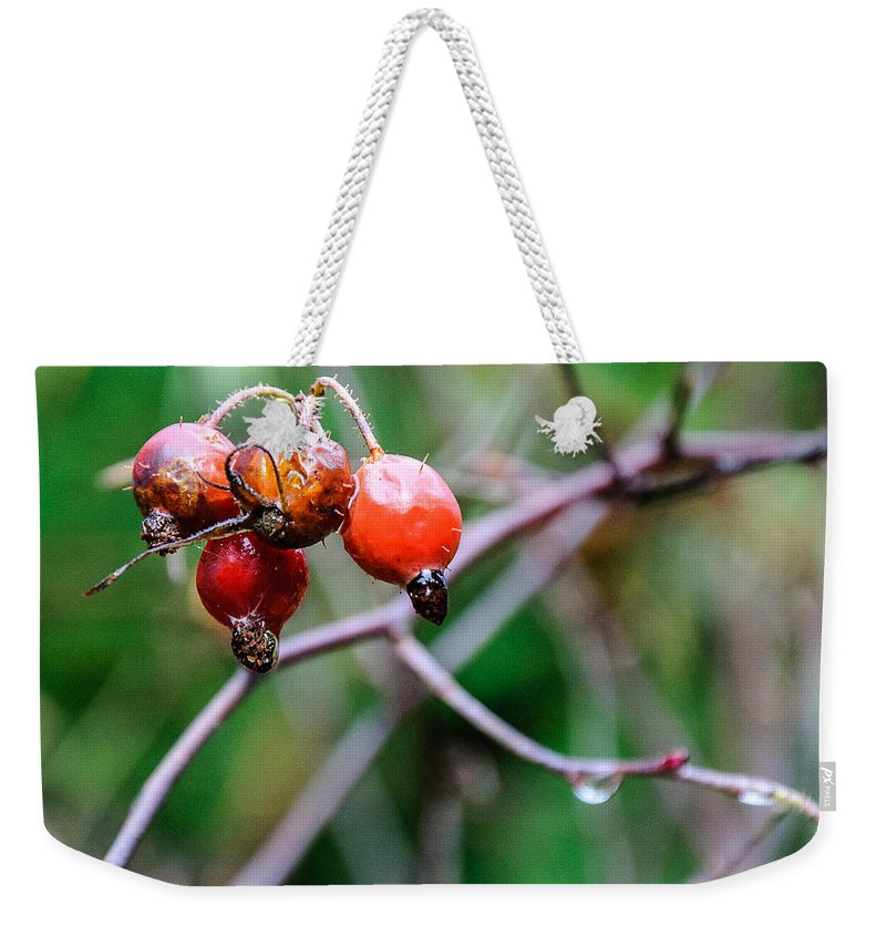 Rose Hip Weekender Tote Bag featuring the photograph Rose Hip Wet by Roxy Hurtubise