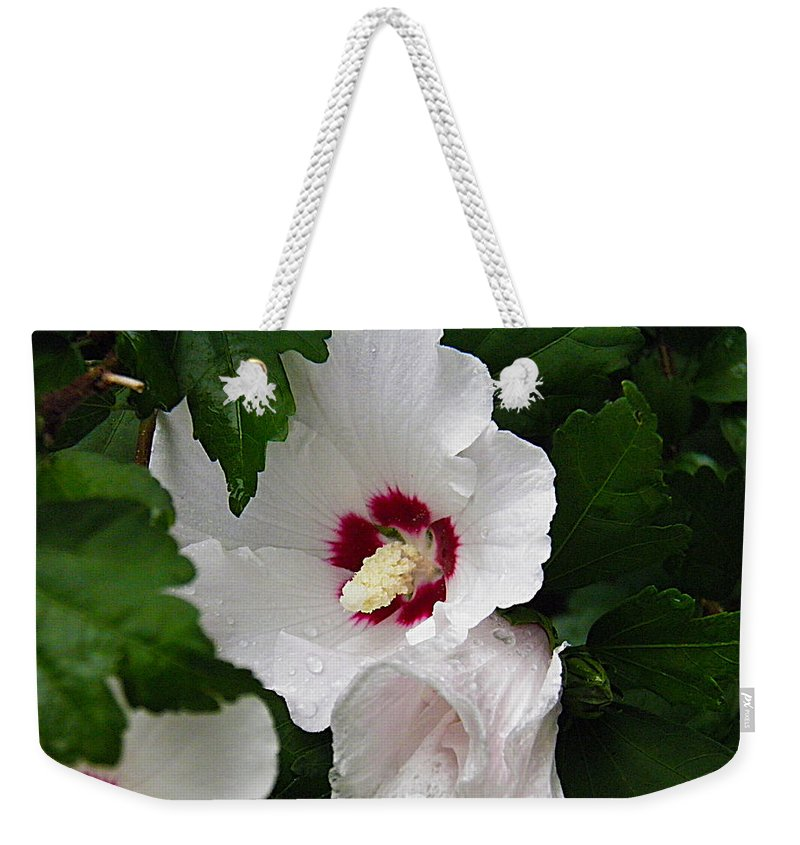 Rose Weekender Tote Bag featuring the photograph Rose Of Sharon by Nick Kirby
