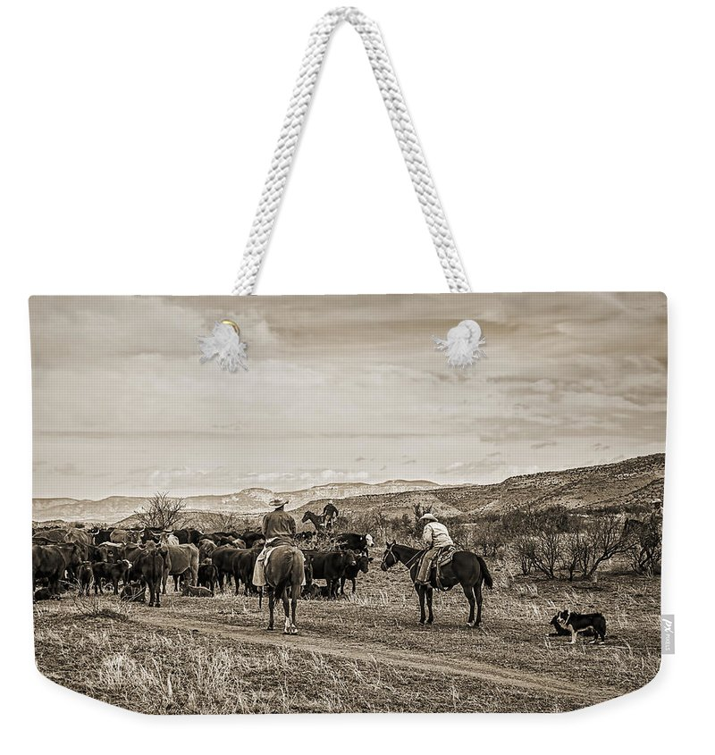 Cattle Roundup Weekender Tote Bag featuring the photograph Rounding Up Cattle In Cornville Arizona Sepia by Priscilla Burgers