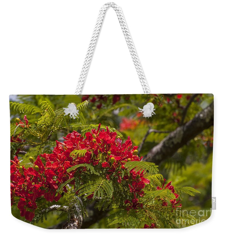 Flamboyant Flame Tree Royal Poinciana Trees Flower Flowers Bloom Blooms Blossom Blossoms Nature East Maui Hawaii Weekender Tote Bag featuring the photograph Royal Poinciana by Bob Phillips
