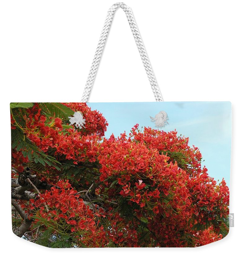 Trees Weekender Tote Bag featuring the photograph Royal Poinciana Branch by Mary Deal