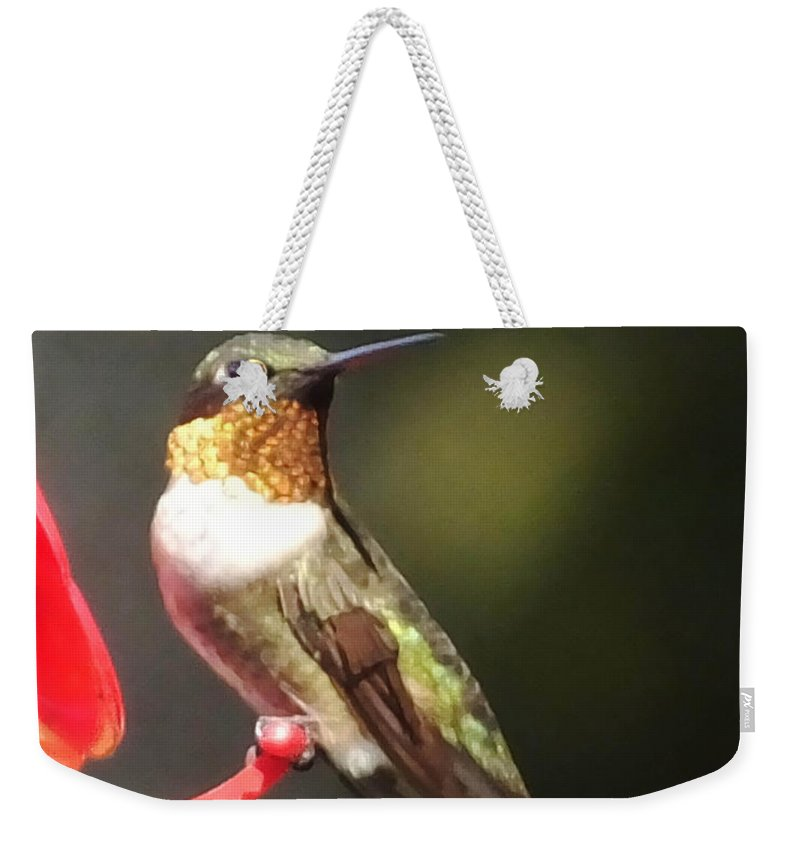 Ruby Throated Weekender Tote Bag featuring the photograph Ruby Throated Hummingbird 2 by Lizi Beard-Ward