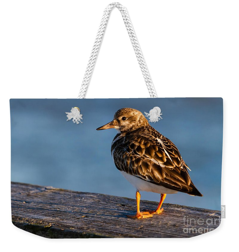 Ruddy Turnstone Weekender Tote Bag featuring the photograph Ruddy Turnstone by Dawna Moore Photography