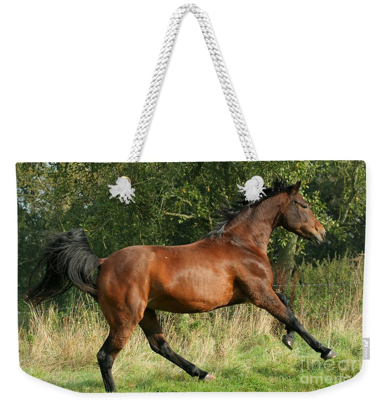 Horse Weekender Tote Bag featuring the photograph run by Angel Ciesniarska