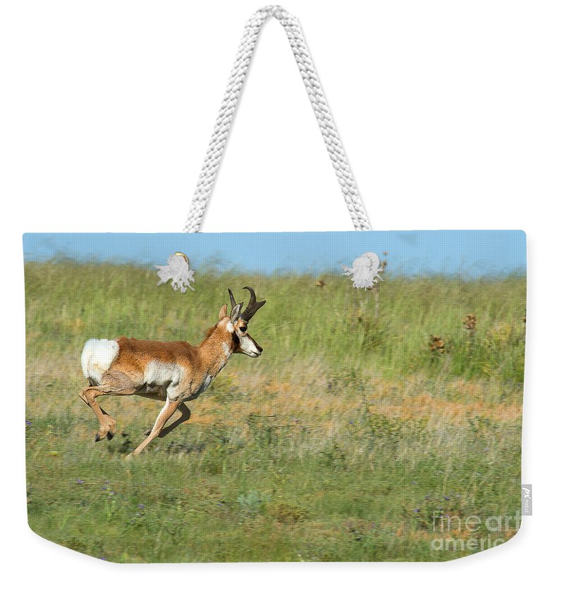 Pronghorn Weekender Tote Bag featuring the photograph Run Light Buck Run by Jim Garrison