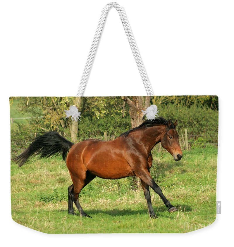 Horse Weekender Tote Bag featuring the photograph Run Run by Angel Ciesniarska