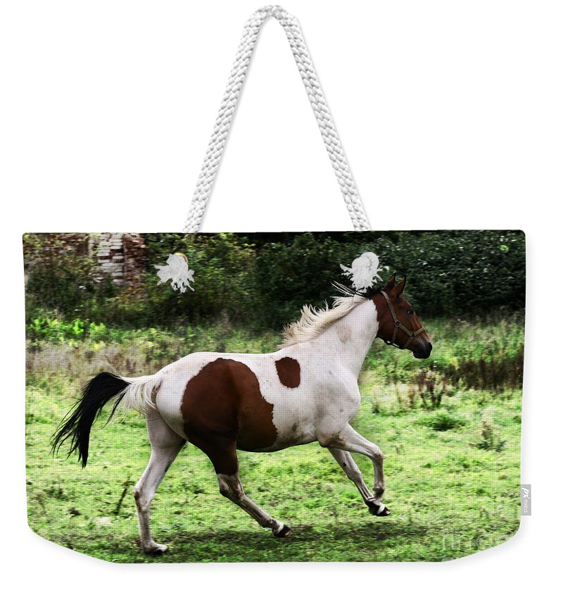 Pinto Weekender Tote Bag featuring the photograph Running Pinto Horse by Angel Ciesniarska