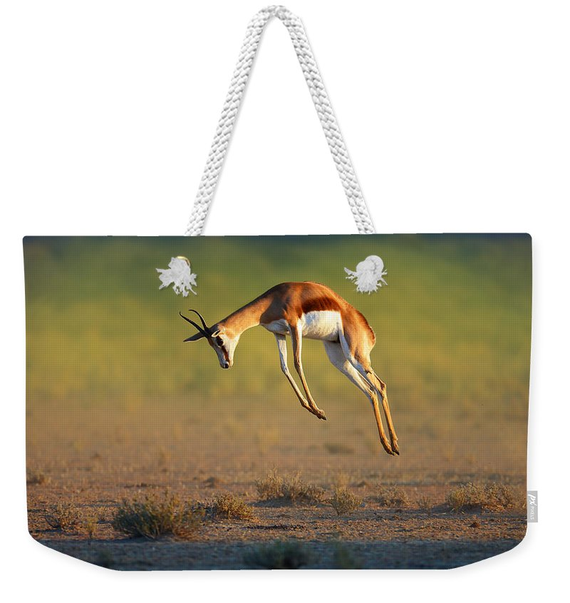 Springbok Weekender Tote Bag featuring the photograph Running Springbok Jumping High by Johan Swanepoel