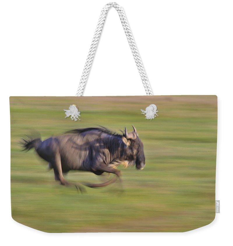 Wildebeest Weekender Tote Bag featuring the photograph Running Wildebeest IIi by Boyd Norton