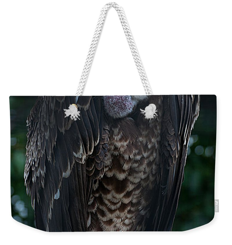 Ruppel's Weekender Tote Bag featuring the photograph Ruppel's Griffon by Photos By Cassandra