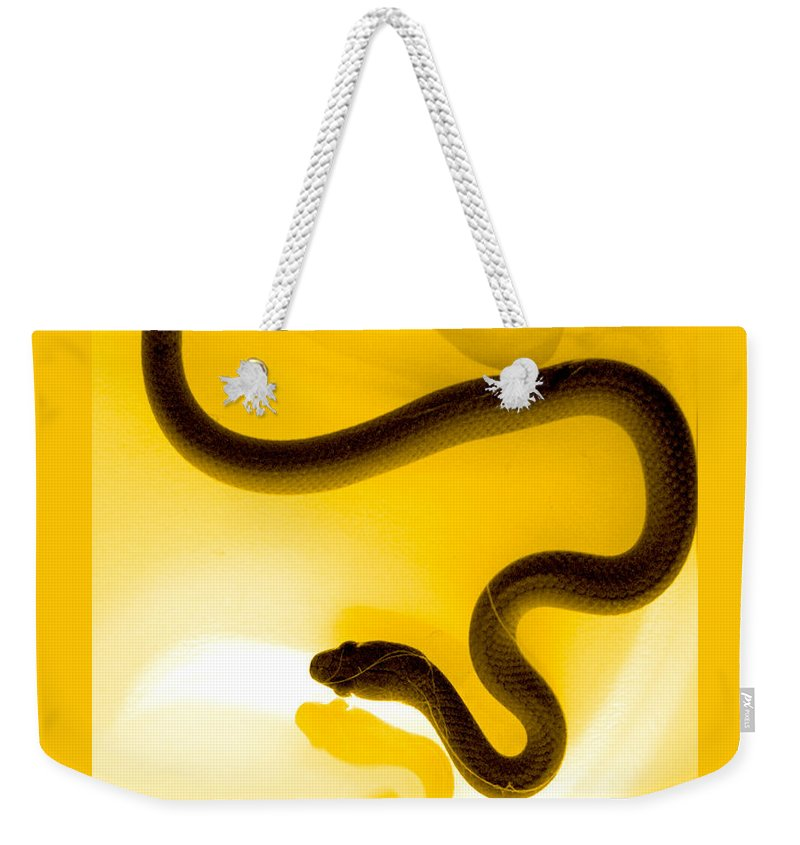 Animal Weekender Tote Bag featuring the photograph S by Holly Kempe