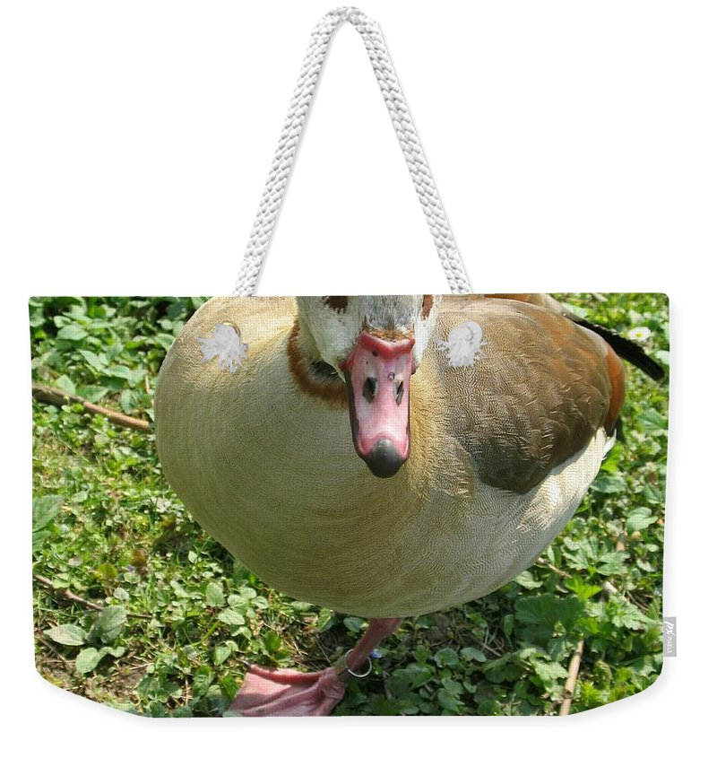 Goose Weekender Tote Bag featuring the photograph Sad Goose by Christiane Schulze Art And Photography