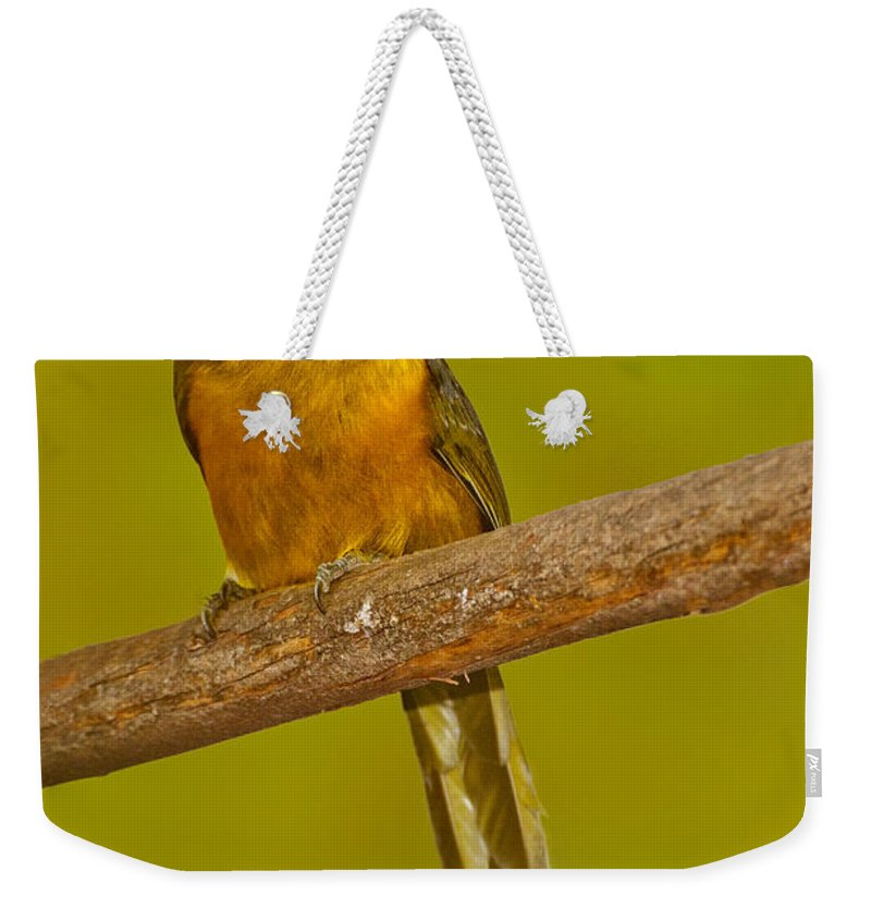 Animal Weekender Tote Bag featuring the photograph Saffron Toucanet by Anthony Mercieca