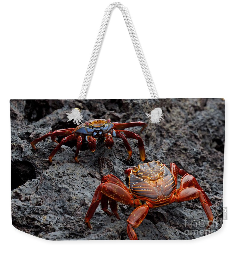 Sally Lightfoot Crab Weekender Tote Bag featuring the photograph Sally Light Foot Crabs Galapagos by Jason O Watson