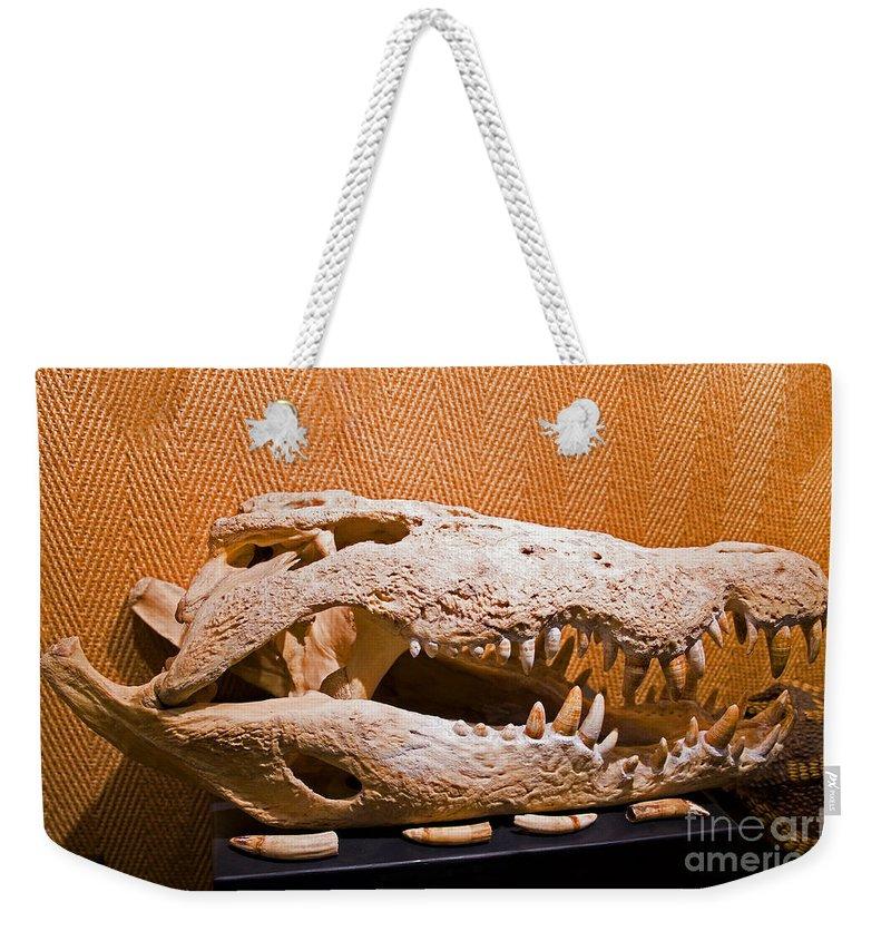 Nature Weekender Tote Bag featuring the photograph Salt Water Crocodile Skull by Millard H. Sharp