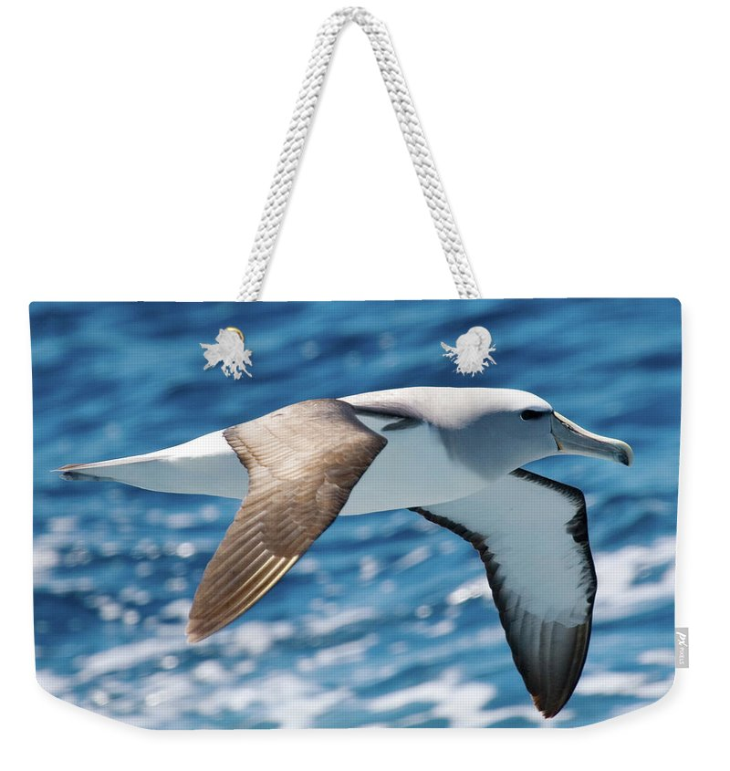 Nature Weekender Tote Bag featuring the photograph Salvins Albatross by Dave Walsh