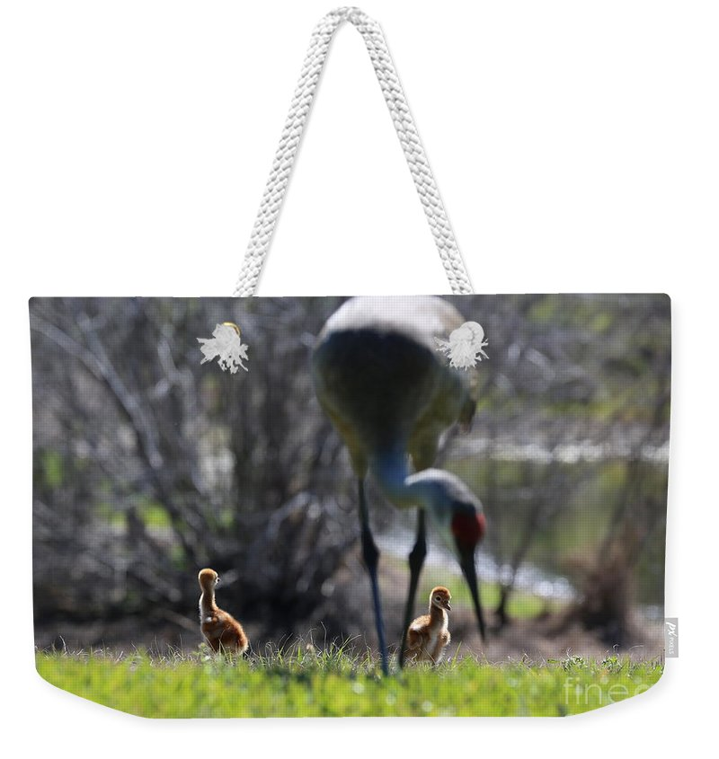 Sandhill Crane Chicks Weekender Tote Bag featuring the photograph Sandhill Chicks Under Foot by Carol Groenen