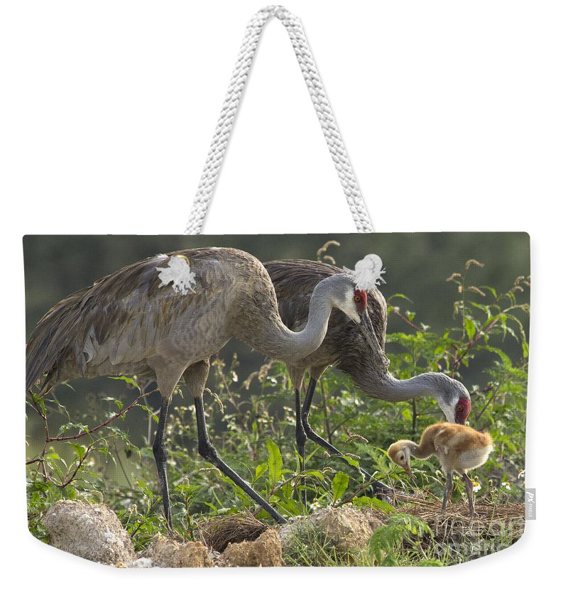 Sandhill Crane Weekender Tote Bag featuring the photograph Sandhill Crane Family by Meg Rousher