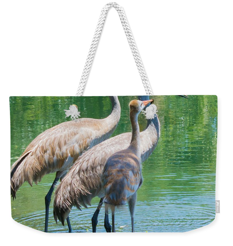 susan Molnar Weekender Tote Bag featuring the photograph Mom Look What I Caught by Susan Molnar