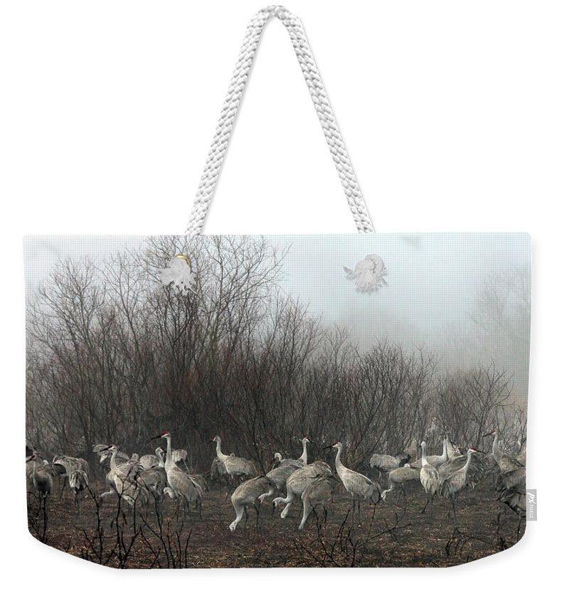 Sandhill Weekender Tote Bag featuring the photograph Sandhill Cranes In The Fog by Farol Tomson