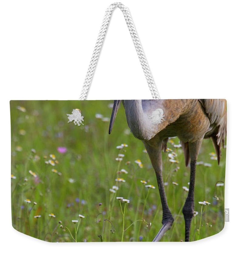 Sandhill Cranes Weekender Tote Bag featuring the photograph Sandhill Cranes by Jose More