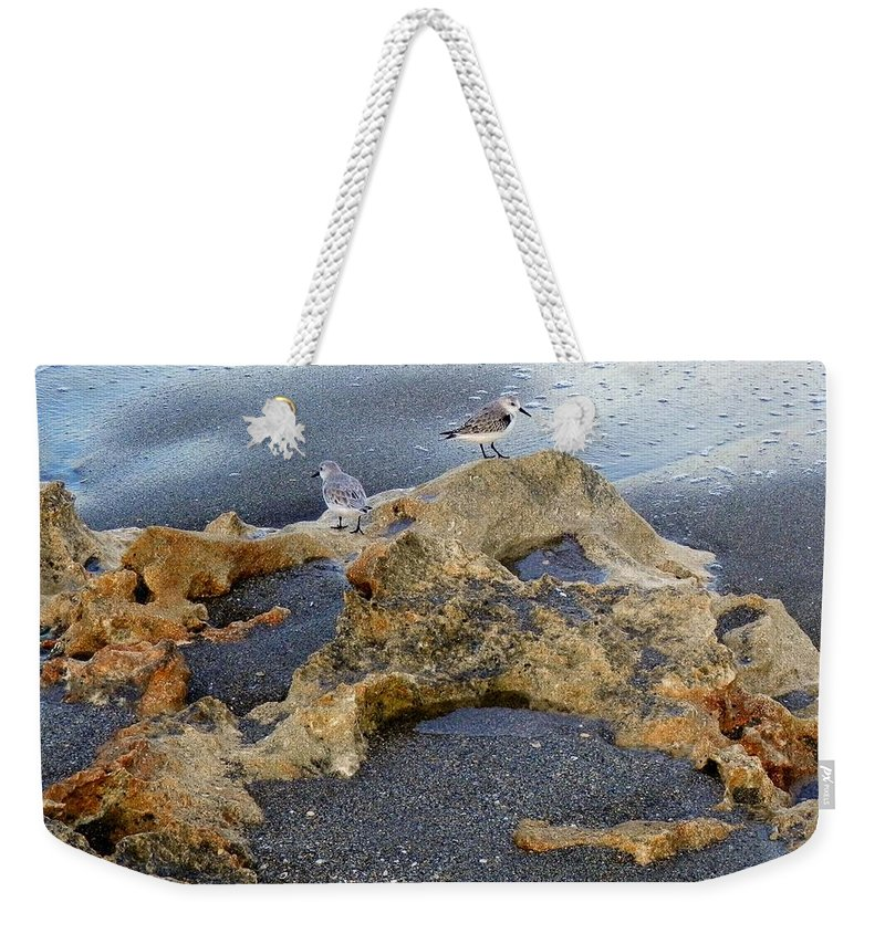 Sandpipers Weekender Tote Bag featuring the photograph Sandpipers 1 by Joe Wyman