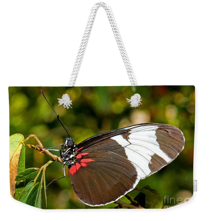 Black And White Butterfly Weekender Tote Bag featuring the photograph Sapho Butterfly by Millard H. Sharp