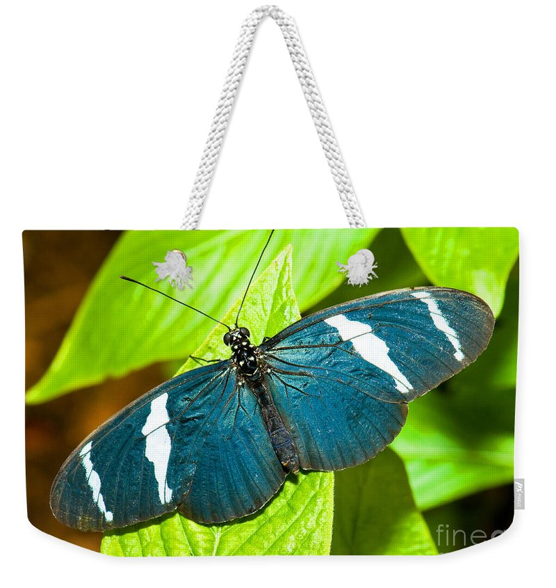 Tropical Butterfly Weekender Tote Bag featuring the photograph Sara Butterfly by Millard H. Sharp