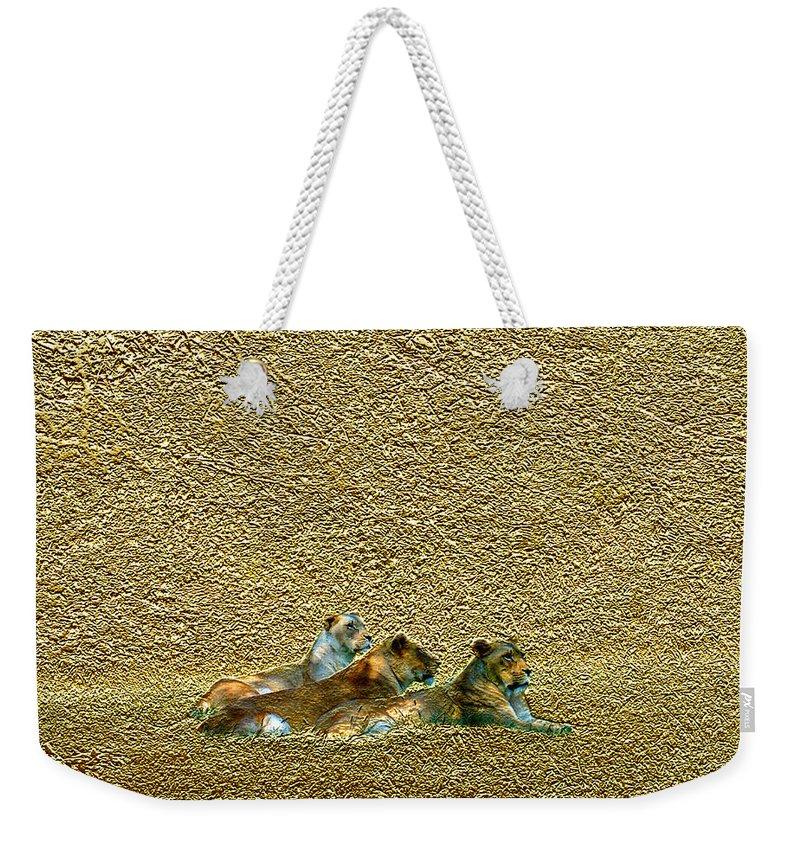Lions Weekender Tote Bag featuring the photograph Savannah Queens by Steve Karol