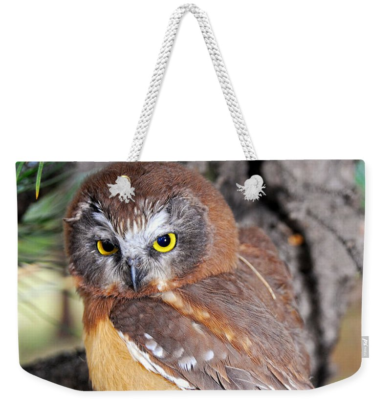 Saw Whet Weekender Tote Bag featuring the photograph Saw-whet Owl In Conifers by Timothy Flanigan